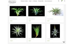 Shop.Tillandsia.it